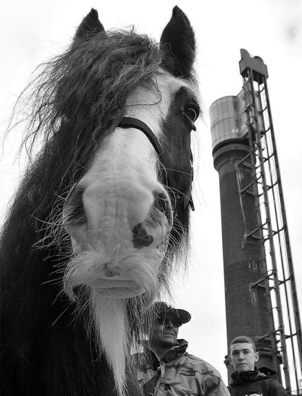 Questo cavallo ha capelli facciali alla moda