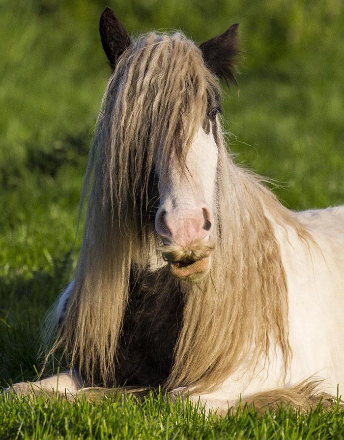 Horse-Baffi