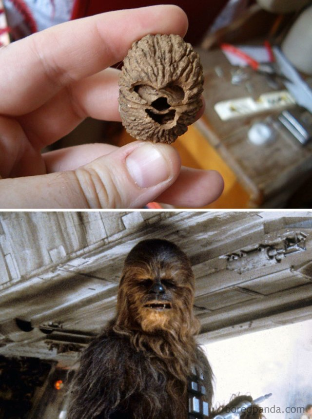Esta nuez semeja Chewbacca