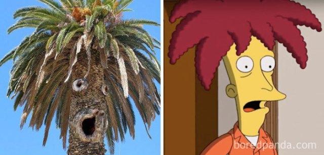 Esta palmera se semeja al Actor Secundario Bob
