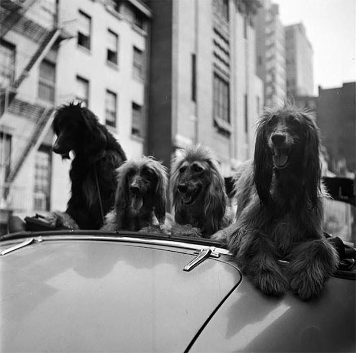 Dogs In A Convertible, 1949