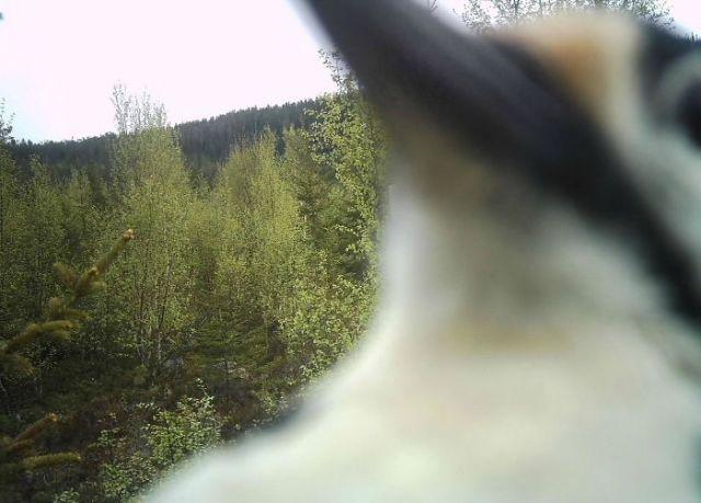 Mi amigo halló su cámara destruida, cual si alguien le hubiese clavado un destornillador. Esta fue su última foto