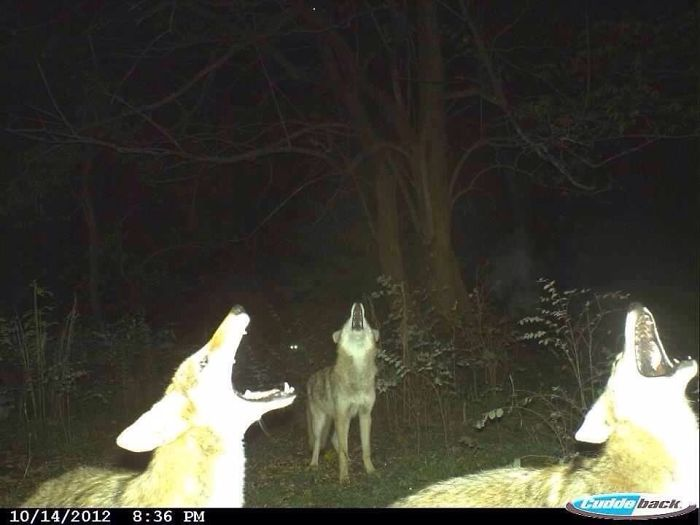 This Trail Camera Got A Badass Shot