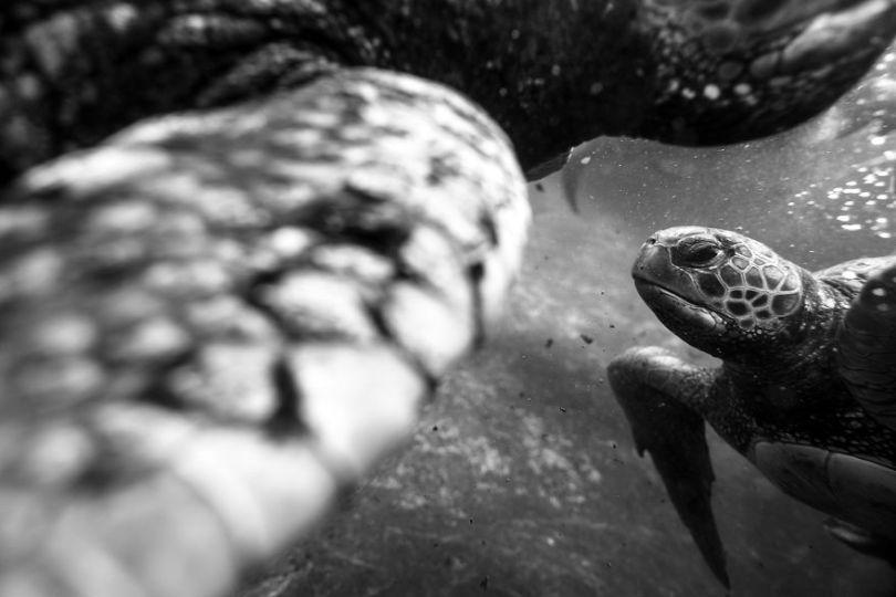 IMG 1755 Edit 59f08c2c44c06  880 - Homem especializa-se em fotografar resgate de tartarugas