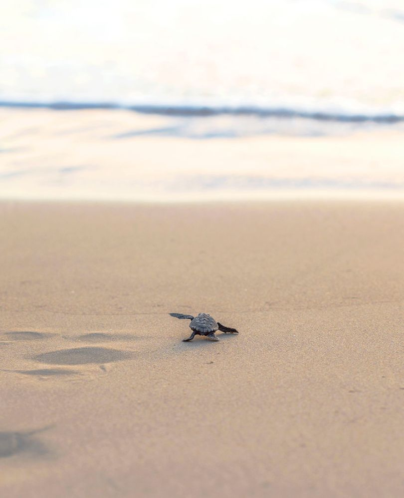 IMG 977111 59f08d1496ab3  880 - Homem especializa-se em fotografar resgate de tartarugas