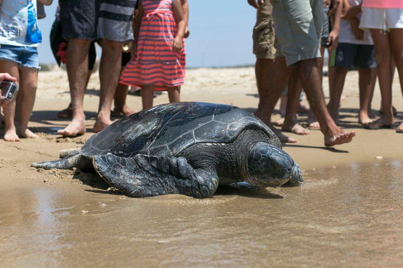 MG 6475 59f08c03863c9  880 - Homem especializa-se em fotografar resgate de tartarugas