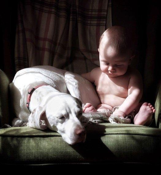 abused-rescue-dog-love-child-nora-elizabeth-spence-32