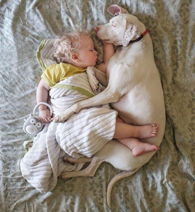 abused-rescue-dog-love-child-nora-elizabeth-spence-45