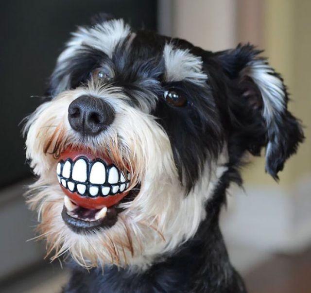 El dentista me ha regalado una pelota para el perro