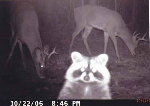 Anoche hubo una celebración y el mapache se hizo un selfie