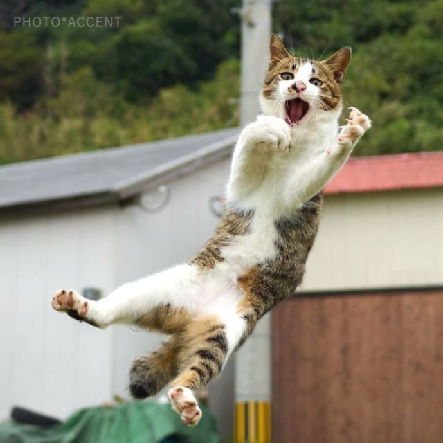 This Japanese Photographer Specializes In Shooting Cats Doing Martial Arts, And The Result Is Too Purrfect