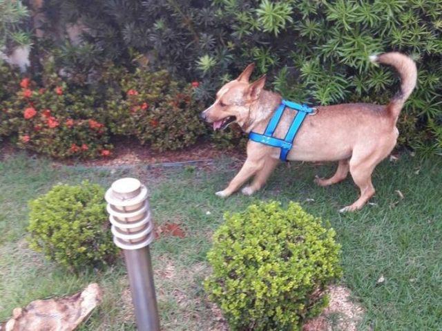 stray-dog-crash-wedding-matheus-marilia-pieroni-6