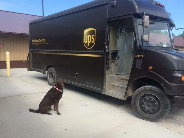 ups-dogs-facebook-group-drivers-meet-routes-sean-mccarren-43