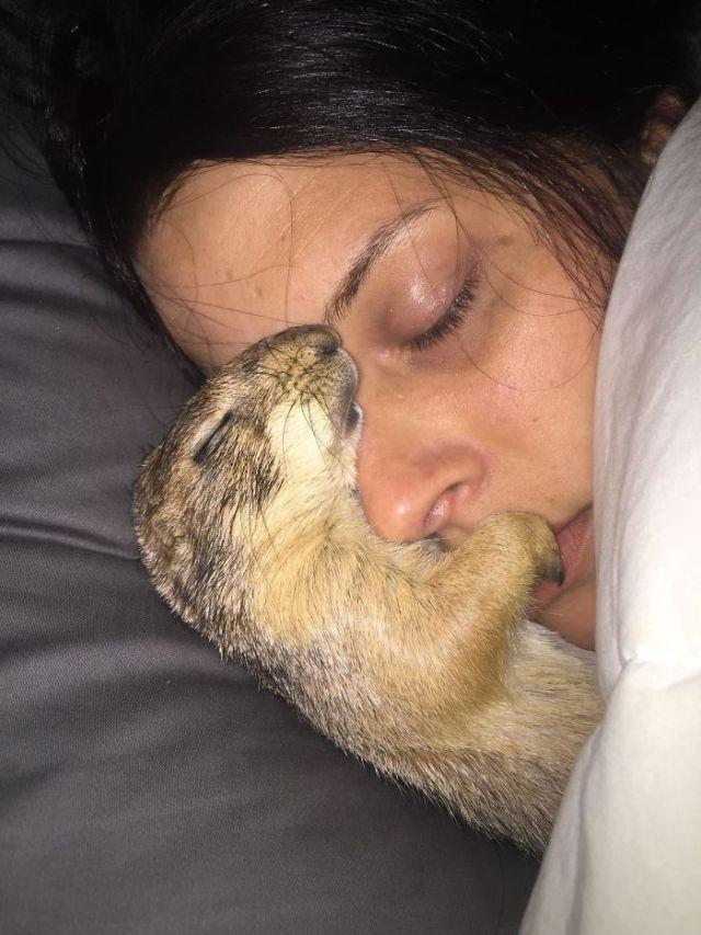 Mi chucho de las praderas durmiendo con mi novia