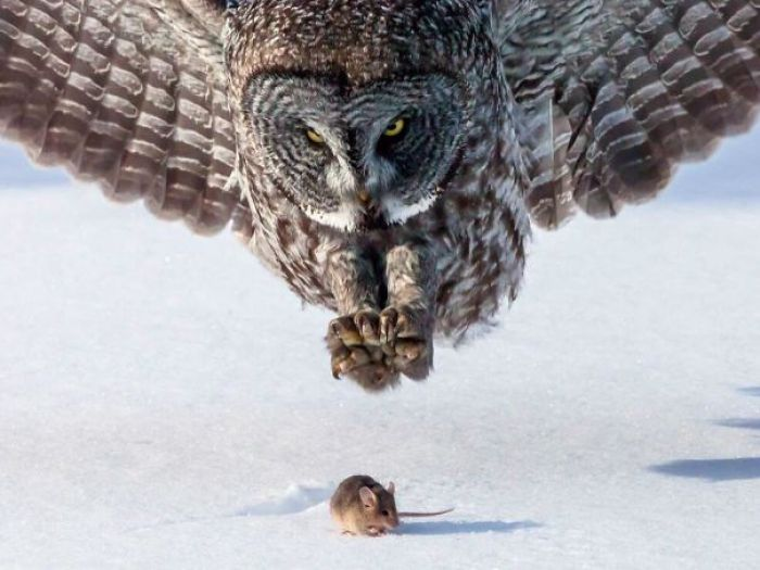 Perfectly Timed Shot