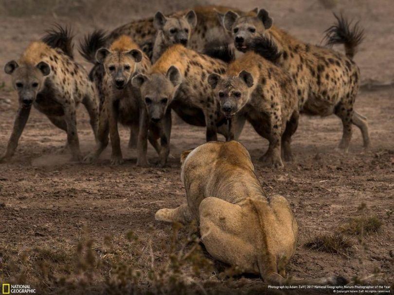 ADAM ZAFF 5a033c13dd06b  880 - 27 finalistas da National Geographic 2017 - categoria Natureza