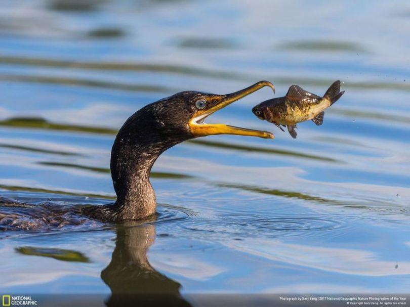 GARY ZENG 5a033c7f7b1a5  880 - 27 finalistas da National Geographic 2017 - categoria Natureza