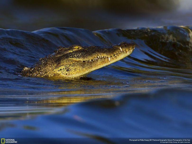 PHILLIP CHANG 5a0338c80ba01  880 - 27 finalistas da National Geographic 2017 - categoria Natureza