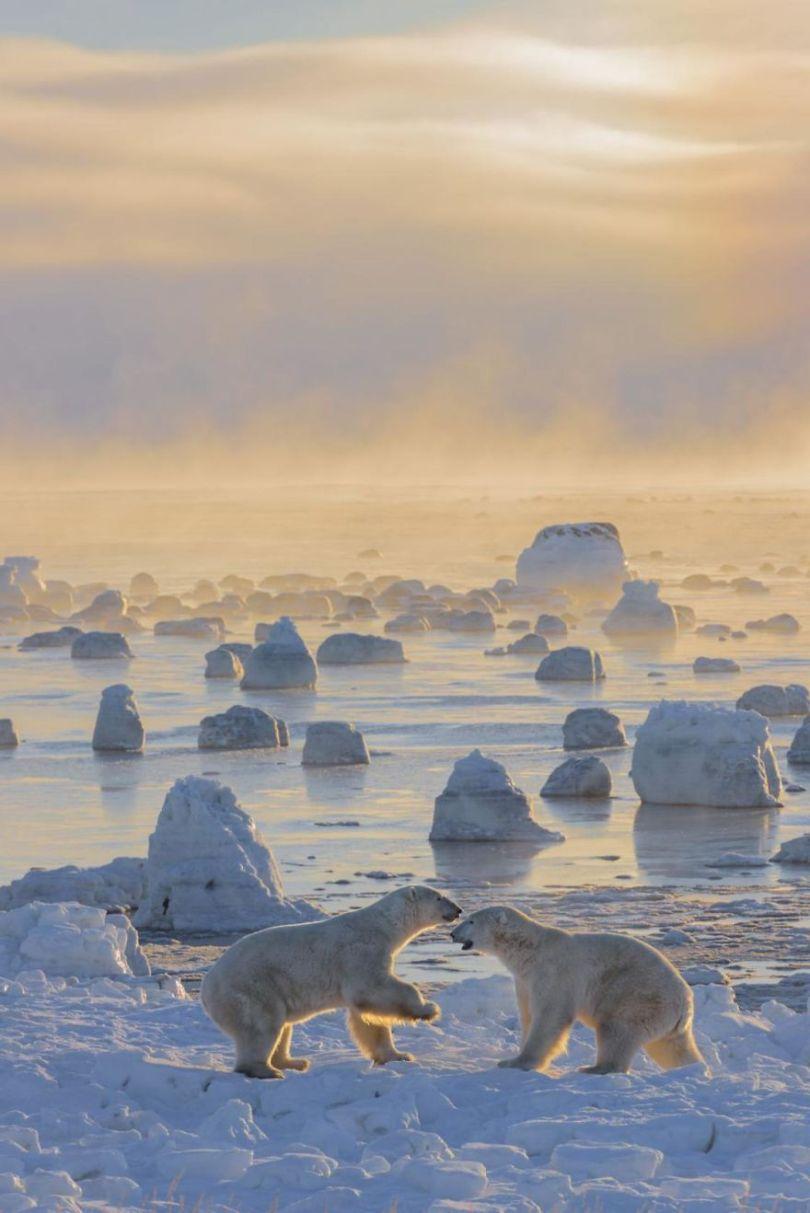 RICK BELDEGREEN 5a03393bc08d9  880 - 27 finalistas da National Geographic 2017 - categoria Natureza