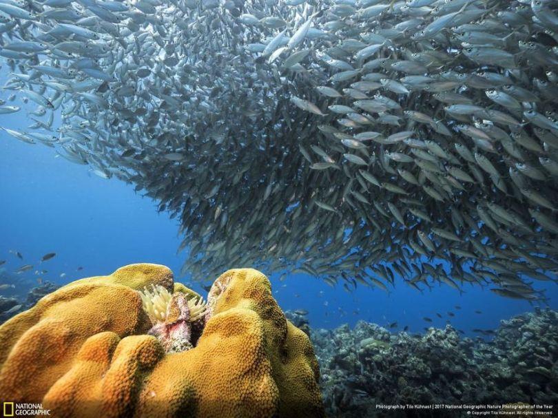 TILO KUHNAST 5a03403806317  880 - 27 finalistas da National Geographic 2017 - categoria Natureza