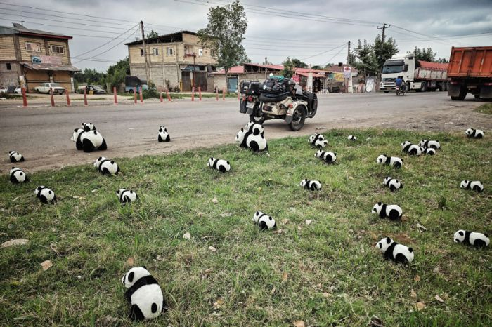 Panda Invasion On The Streets Of Iran