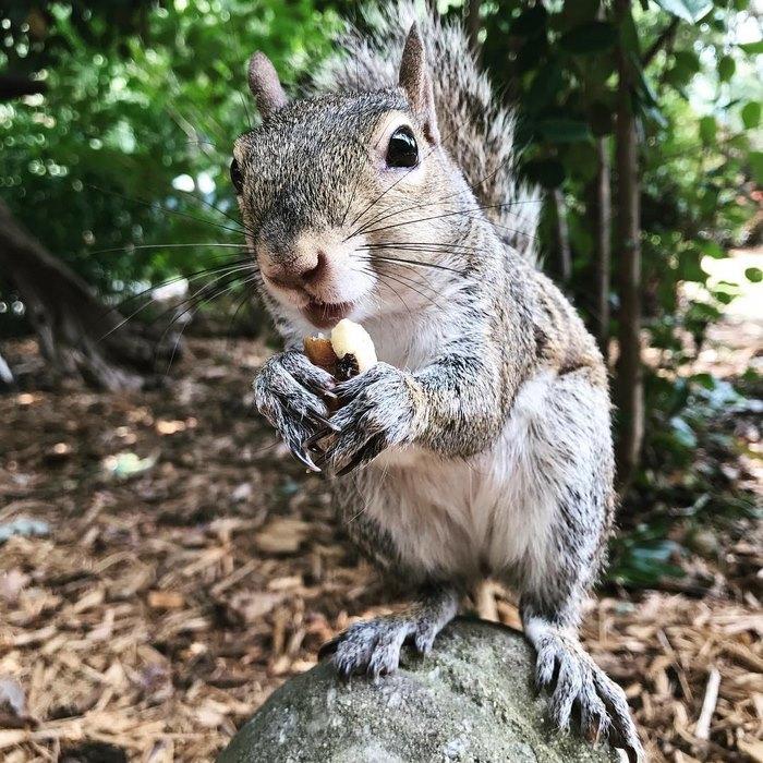 squirrel-come-back-save-family-bella-brantley-harrison-10