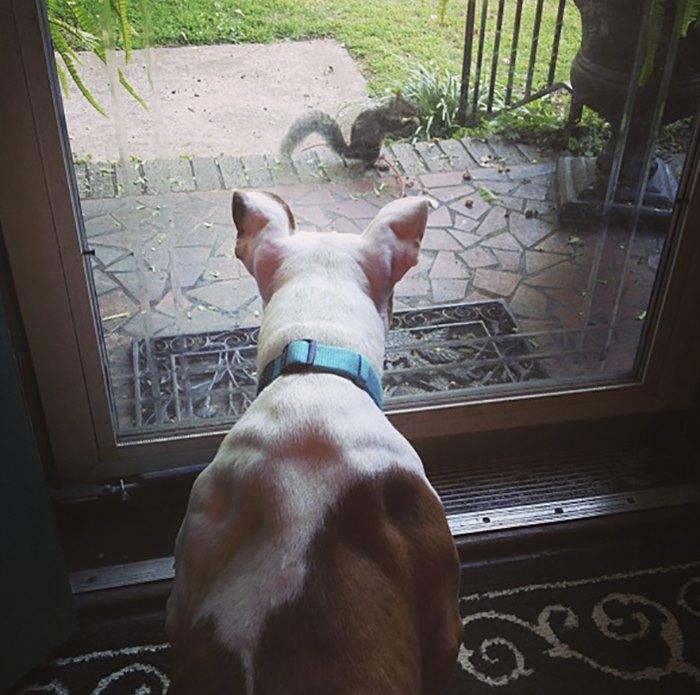 squirrel-come-back-save-family-bella-brantley-harrison-25