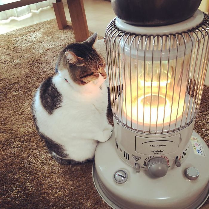 cat-heater-busao-tanryug-22-5a6aef0bc6818__700 Hilarious Photos Of Cat Falling In Love With A Heater During Cold Weather Will Make Your Day Design Random