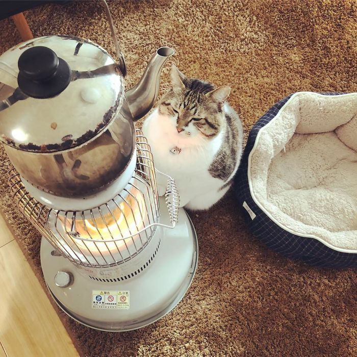 cat-heater-busao-tanryug-25-5a6aef10e0f5d__700 Hilarious Photos Of Cat Falling In Love With A Heater During Cold Weather Will Make Your Day Design Random
