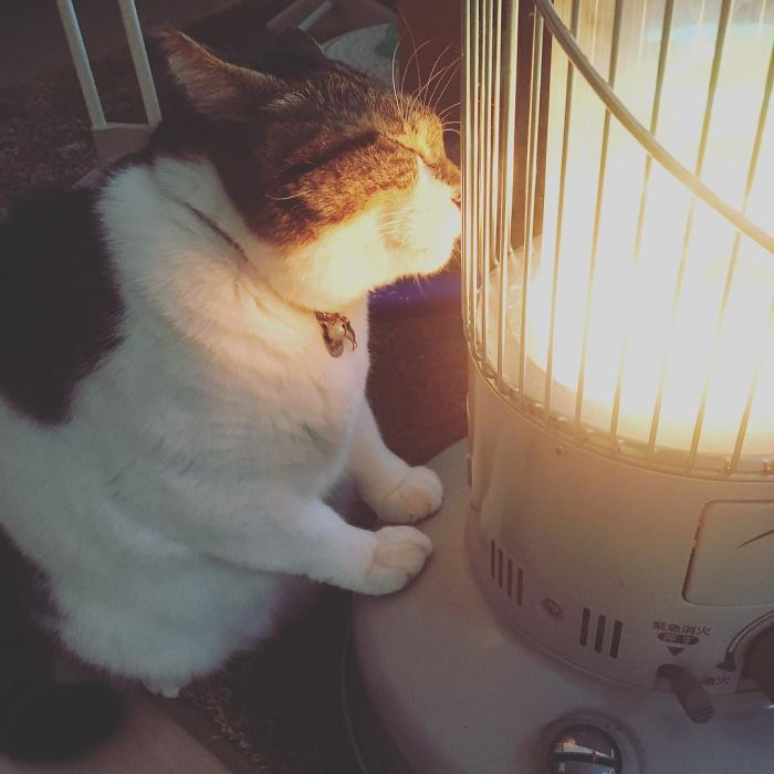 cat-heater-busao-tanryug-4-5a6aeee59b1f8__700 Hilarious Photos Of Cat Falling In Love With A Heater During Cold Weather Will Make Your Day Design Random