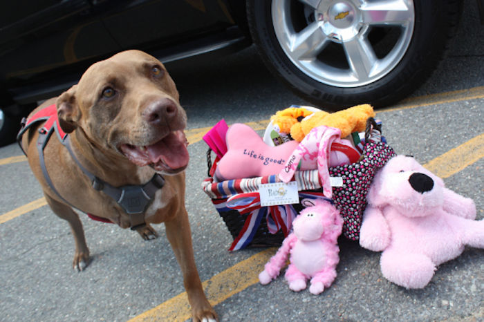 Pit Bull Lilly Saved Her Unconscious Owner From Getting Hit By A Freight Train By Covering Her Body And Taking The Hit Herself