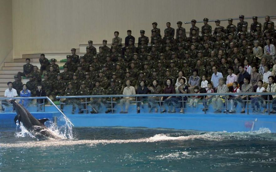 When Visiting The Delphinium In Pyongyang, You Can Photograph The Animals, But Not The Soldiers Who Make Up 99% Of The Crowd