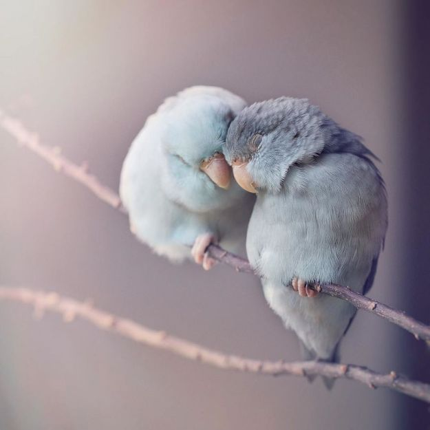 A-Storybook-Love-Between-Pastel-Parrotlets-5a83f868ae375__880 I Document A Storybook Love Between My Pastel Parrotlets, And The Result Will Melt Your Heart Design Random