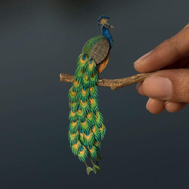 Peafowl (Peacock)