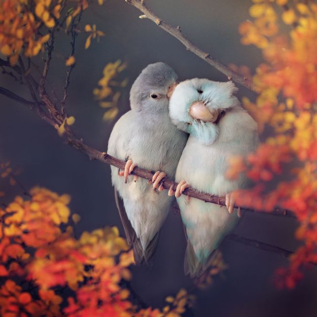 Z1A0836-Edit-Edit-Edit-copy-5a832b227f147__880 I Document A Storybook Love Between My Pastel Parrotlets, And The Result Will Melt Your Heart Design Random