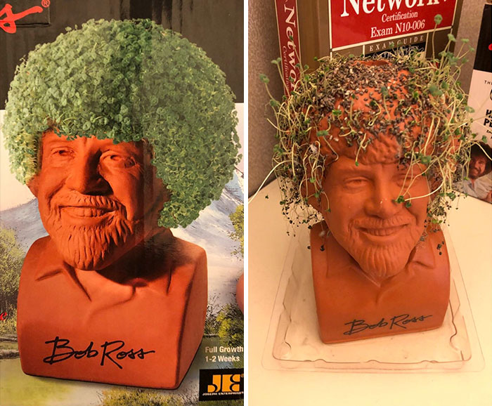 I Bought This Bob Ross Chia Pet... These Are Not Happy Trees
