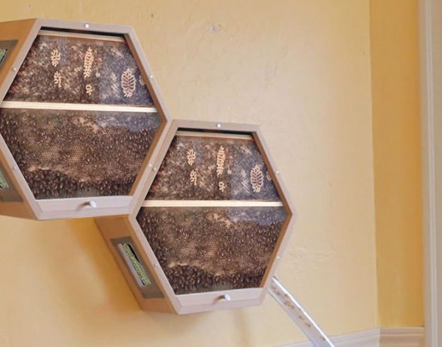 indoors-outdoors-bee-hives-beecosystem-10-5a868c5335715__700 Genius Company Installs Beehives In Your Living Room, And Here's How It Works Design Random