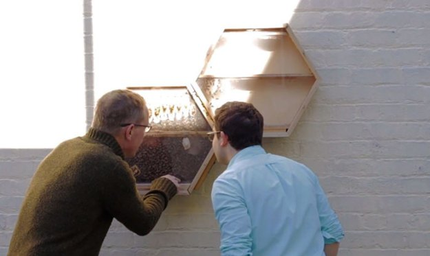 indoors-outdoors-bee-hives-beecosystem-11-5a868c54da984__700 Genius Company Installs Beehives In Your Living Room, And Here's How It Works Design Random
