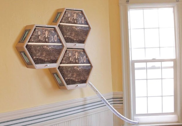 indoors-outdoors-bee-hives-beecosystem-7-5a868c4ddd775__700 Genius Company Installs Beehives In Your Living Room, And Here's How It Works Design Random
