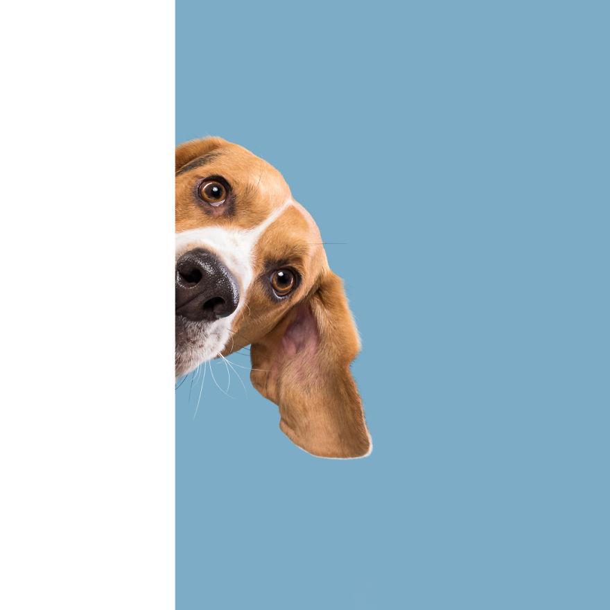 curiosas fotos de perros Shy Ernie