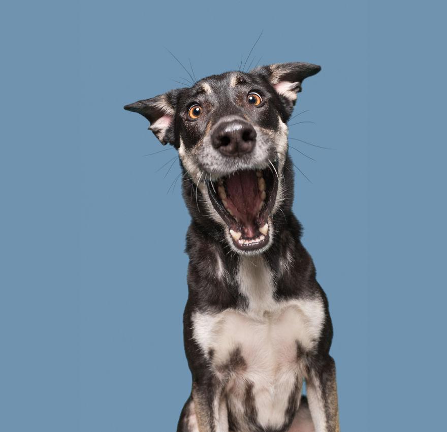 curiosas fotos de perros Panicking Jette