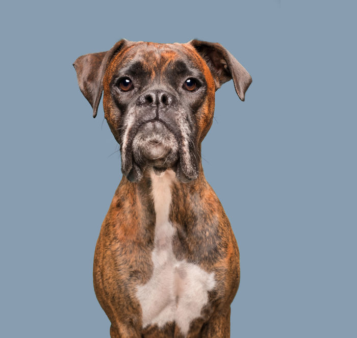 20171113-DisappointedCooper_web-5ab95d91e5a4b__700 I Photograph Dogs To Show How Unique Every Single Of Them Is Design Photography Random