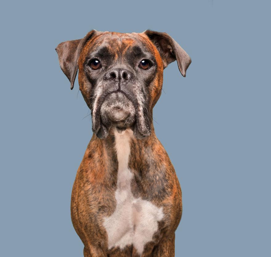 curiosas fotos de perros Very Disappointed Cooper