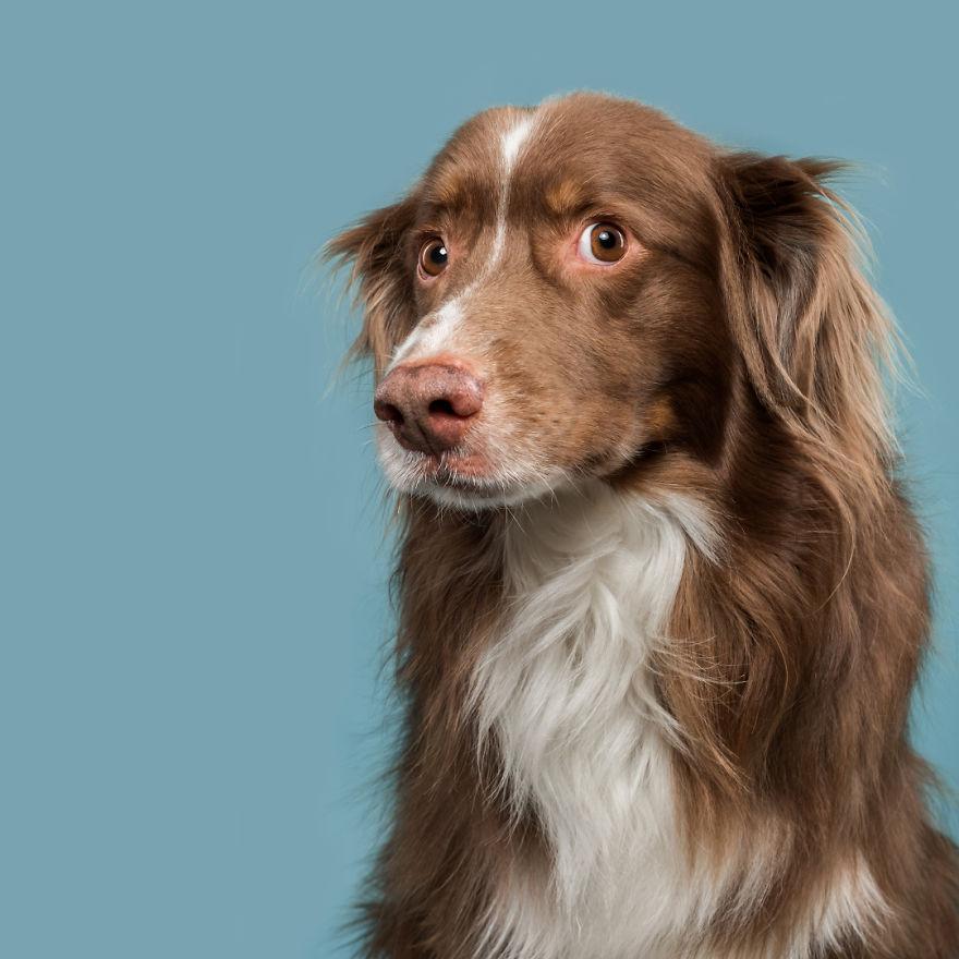 curiosas fotos de perros Intimidated Indiana