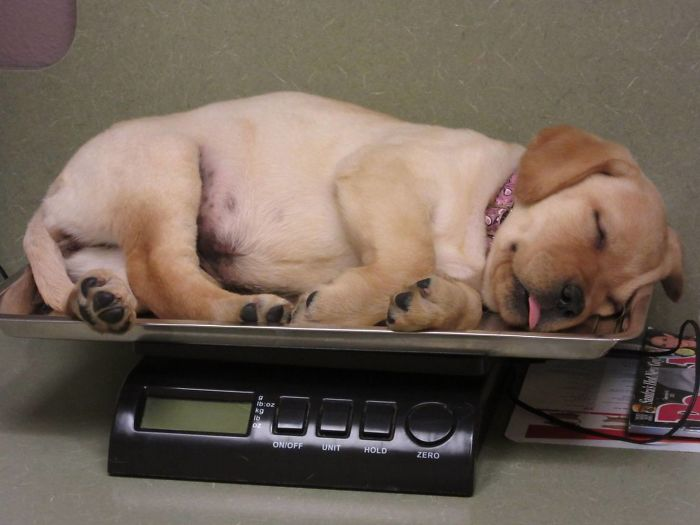 Two Years Ago Today, Nala Fell Asleep On The Scale At Her First Visit To The Vet
