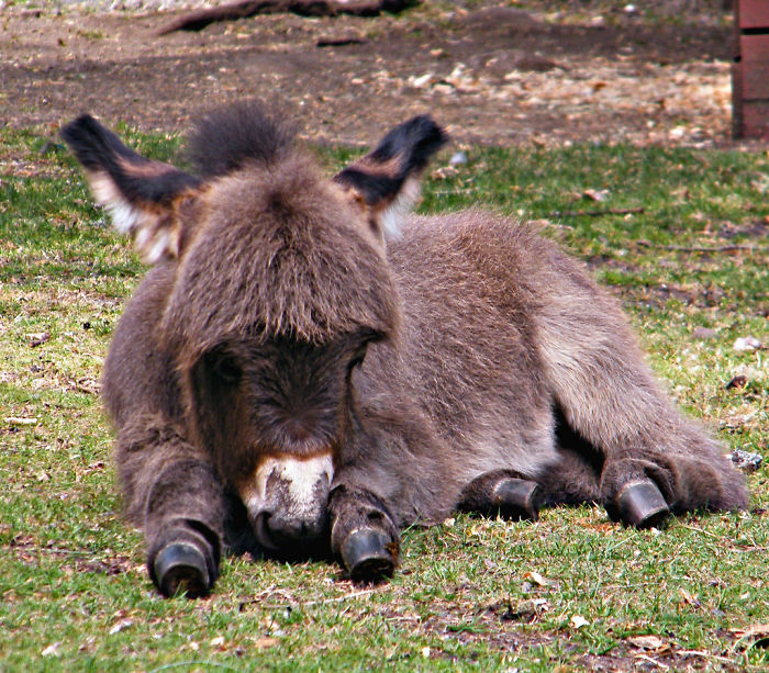 5a98008dbf63d_3605982477_b2084306f0_b__700 These 25+ Cute Baby Donkeys Are Everything You Need To See Today Design Random