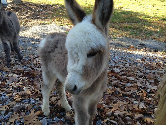 5a9801126252d_B4K4u__700 These 25+ Cute Baby Donkeys Are Everything You Need To See Today Design Random