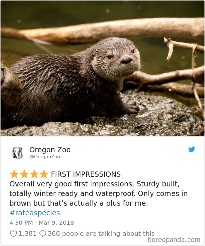 Amazon Animal Review