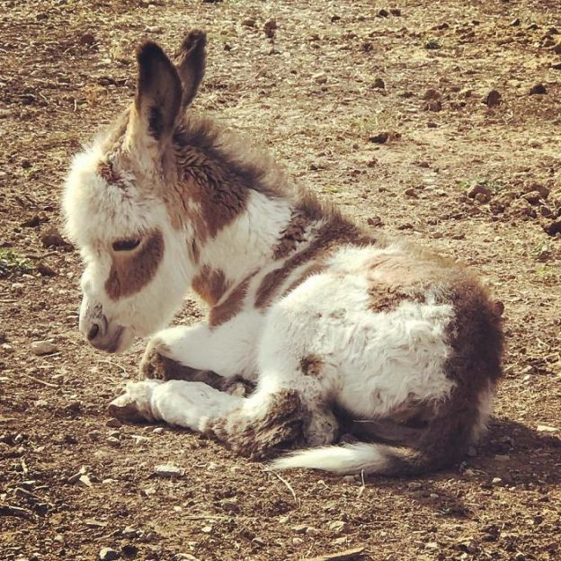 Bb0nTSAB3GR-png__700 These 25+ Cute Baby Donkeys Are Everything You Need To See Today Design Random