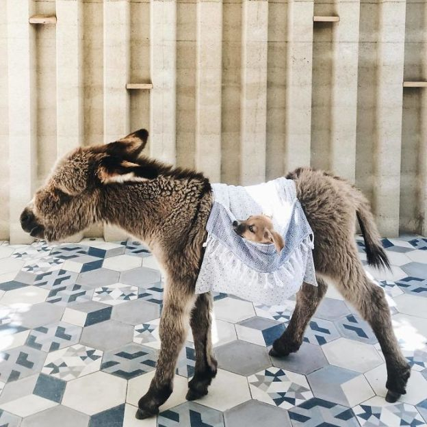 BeJOhLlgfsh-png__700 These 25+ Cute Baby Donkeys Are Everything You Need To See Today Design Random